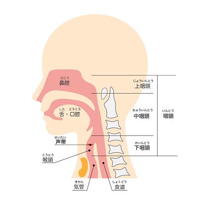 喉のメカニズム