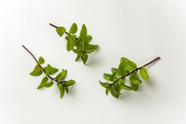 ミントの葉を食べると胸やけが軽減する!胃が超スッキリ♪