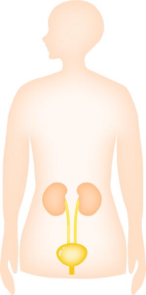 腎臓の場所